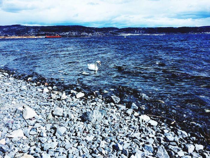 Swanes Ocean Sun Jogging