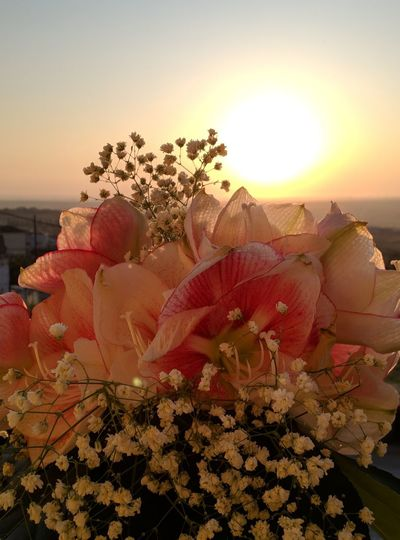 Close-up of flowering plants during sunset