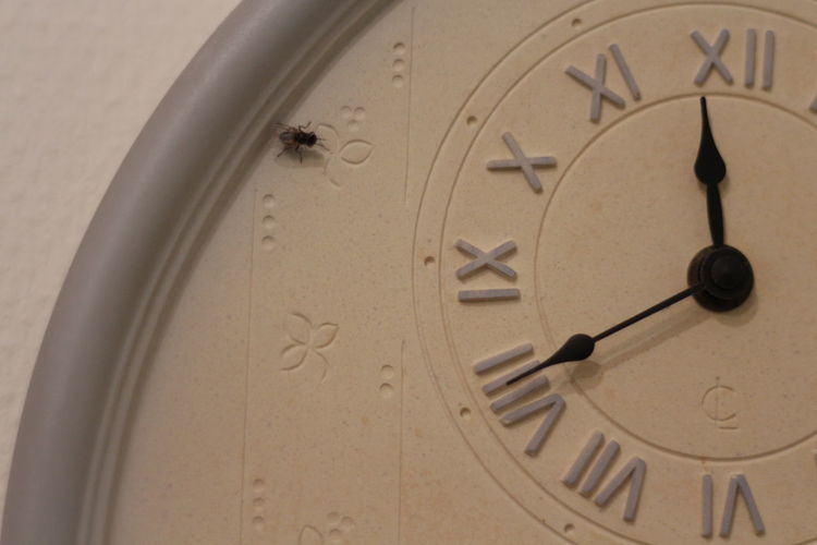 Fly Moskito Clock Clock Face Close-up Day Hour Hand Indoors  Minute Hand No People Number Roman Numeral Time