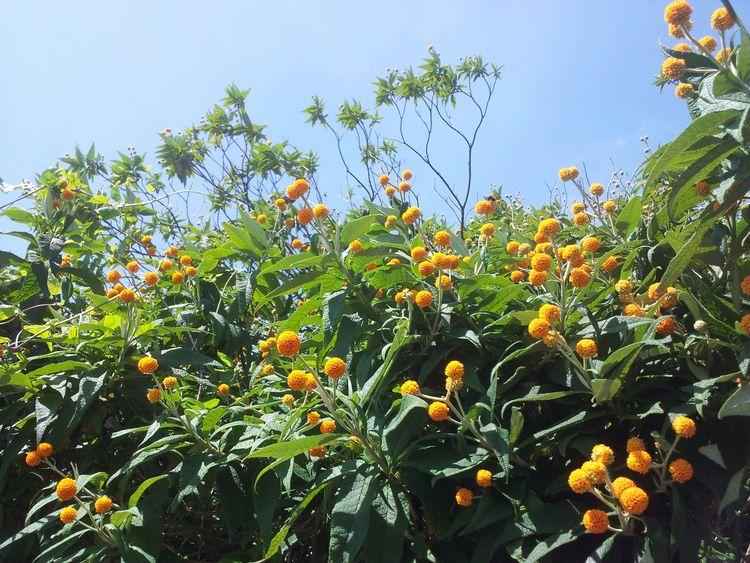 Flowers Essex Frinton-on-Sea
