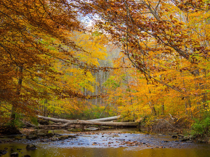 A view of the creek in autumn, Ridley Creek State Park, Pennsylvania. Creek Pennsylvania Autumn Beauty In Nature Change Day Forest Grass Growth Landscape Leaf Mountain Nature No People Outdoors Reflection Ridley Creek State Pa River Scenics Sky Tranquil Scene Tranquility Tree Water Yellow