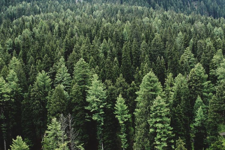 Forest mountain. Plant Tree Green Color Growth Beauty In Nature No People Land Nature Full Frame Outdoors High Angle View Backgrounds Forest