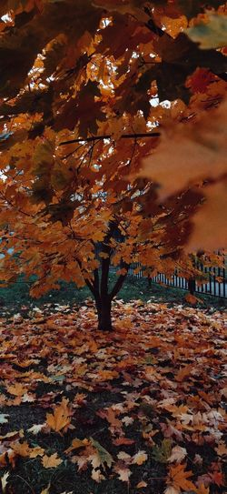 Person by autumn leaves on tree