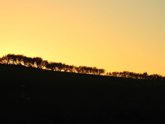 Clear Sky Field Nature No People Outdoors Sky Sunset Tranquil Scene Tree, Silhouette