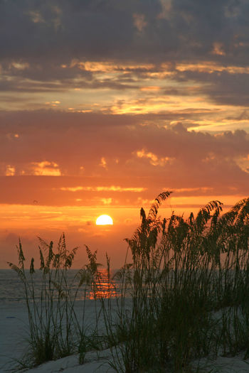 Beach Photography Cloud Gulf Of Mexico Nature Orange Color Outdoors Plant Saint Petersburg Florida Sea Oats Shore Sky Sun Sunset Tampa Bay Water