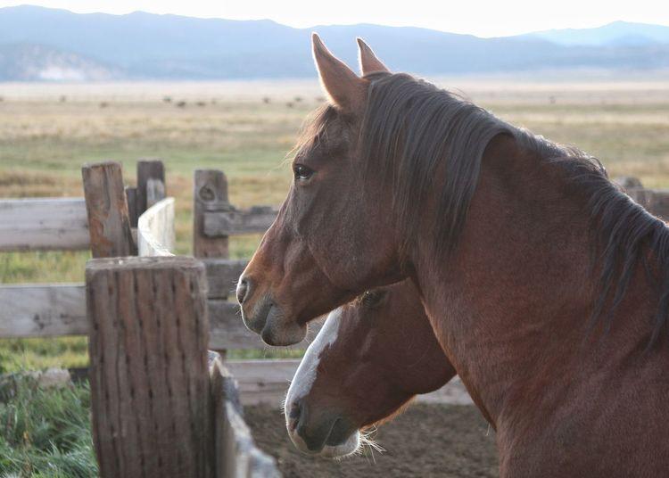 Morning bright Horse EyeEm Selects TheWeekOnEyeEM EyeEm Best Shots Tadaa Community Horse Photography  Eye4photography  Beauty In Nature Morning Light