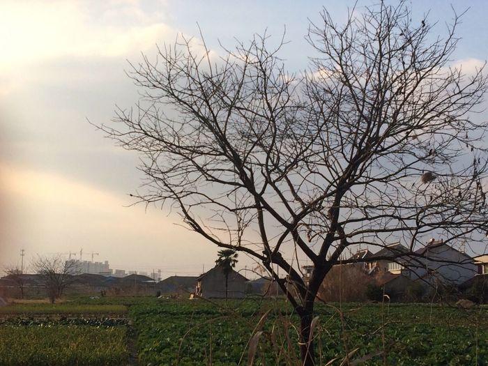 近来独❤️枯树