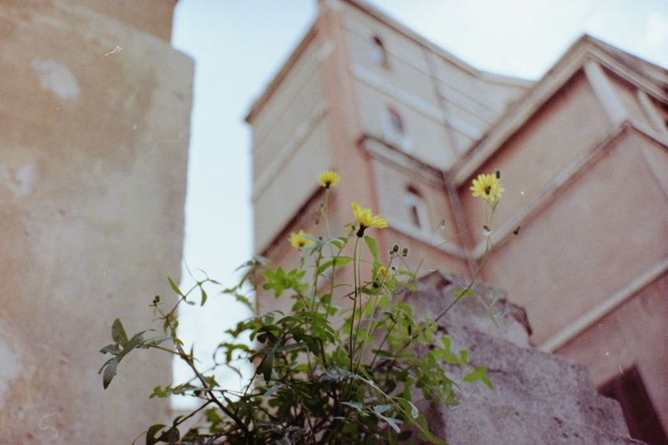 Flower Blurry Background Film Photography Analogue Photography Lomography Selective Focus Flower Simplicity Simple Things Plant City Buildings Architecture Built Structure Day Outdoors