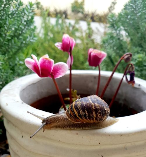 Snail Pot Backyardphotography Insects  Gardening Garden Photography Summetime Beauty In Nature Flower Head Flower Water Tree Close-up Plant In Bloom Petal Flowering Plant Plant Life