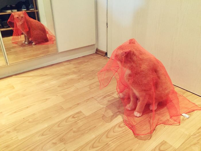 Silkscarf Orange Color Cat Posing For Me The Cat Condition 3XPSUnity EmNewHere Cat Model Cat Collection Cats Of EyeEm Cats 🐱 Cat Eyes Cat Photography Cats 🐱 Reflection Iluminated Cat Looking At The Camera Cat Lovers 🐱💞 My Cat😺🐈