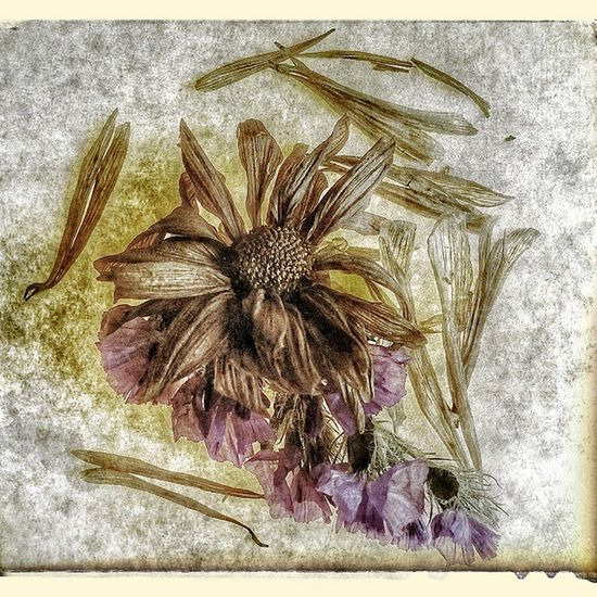 Playing with flowers and textures! Nature Flowers Dryflowers Old Textures Beautiful Picoftheday Instagood Beautyinnature  BeautyinArt Wedstagram Flowersofinstagram Flower _ daily Nature_shooters Flowersmagic Blooms Florals