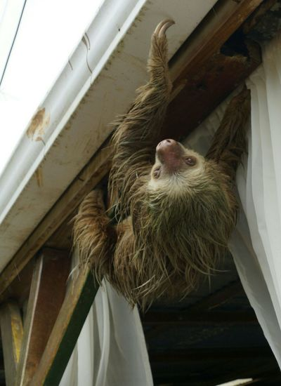 High angle view of sloth on window at home
