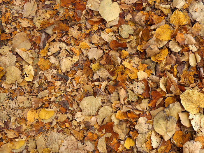 Dry leaves Autumn Autumn Colors Backgrounds Beauty In Nature Change Close-up Crispy Day Dry Colours Dry Leaf Dry Leaves Fragility Full Frame Leaf Leaves Many Natural Phenomenon Nature No People Orange Color Outdoors Rustle