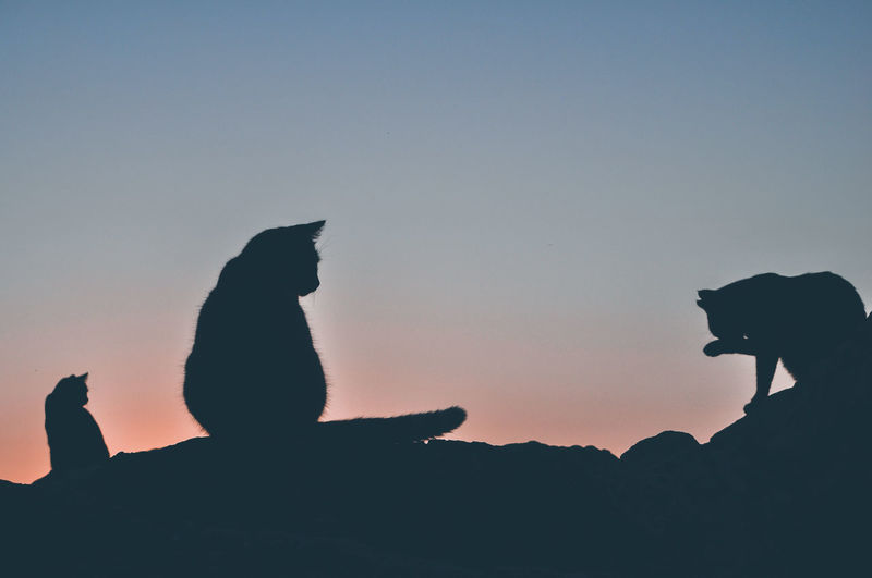 Silhouette of cats against clear sky during sunset