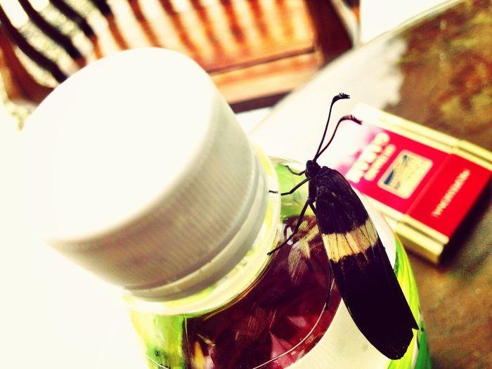 Nature Bugs Close Up