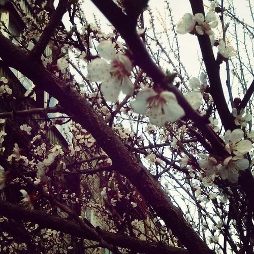 First Eyeem Photo Spring Flowers Apricots