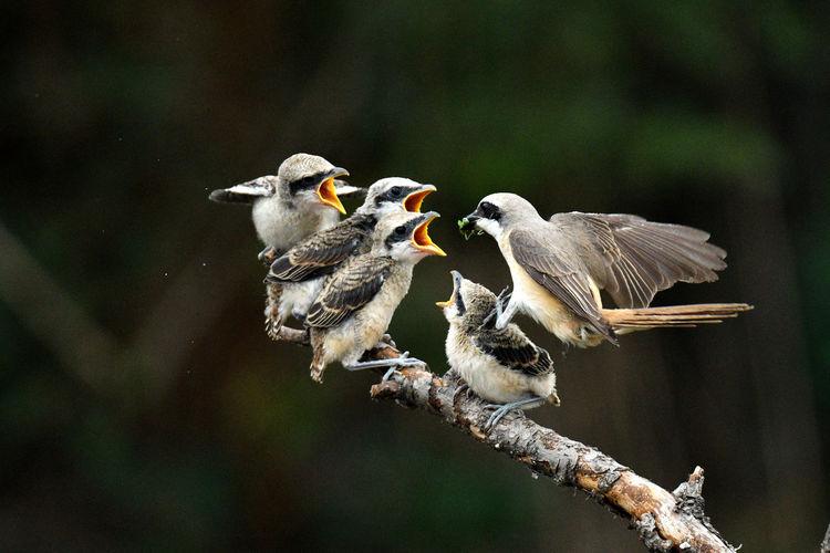 Birds perching on branch