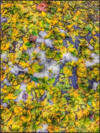 Autumn leaves on Snow - 11/17/18 Malephotographerofthemonth My Point Of View EyeEmNewHere High Angle View Beauty In Nature Backgrounds Full Frame IPhone Edits W/ Snapseed