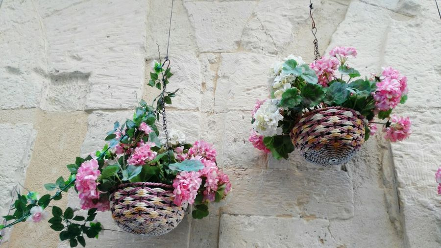 Flower Plant Growth Nature Fragility Pink Color No People Day Outdoors Flower Arrangement Freshness