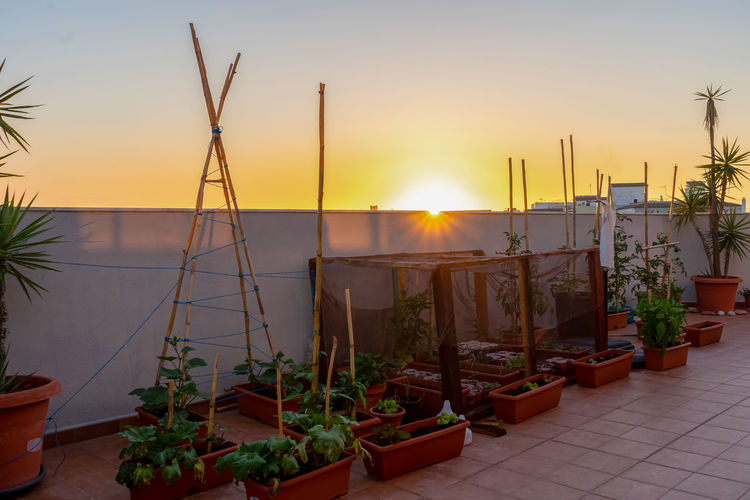 Potted plants against sky during sunset