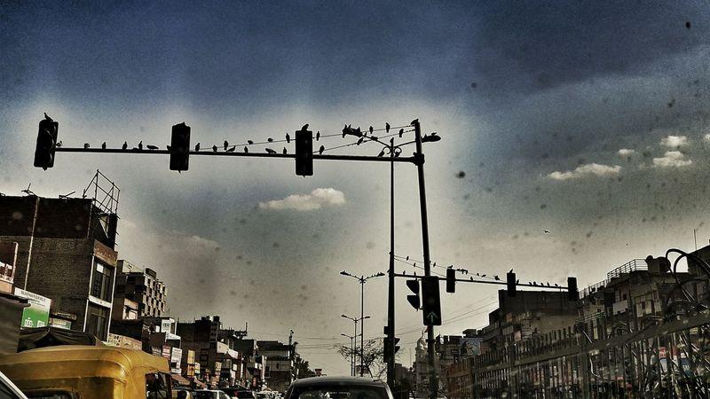 Citylife Traffic Lights Perching Birds Stillness Deceptively Simple EyeEm Gallery EyeEm Team Eyeem Photography Showcase May Rando The Great Outdoors - 2016 EyeEm Awards The Street Photographer - 2016 EyeEm Awards