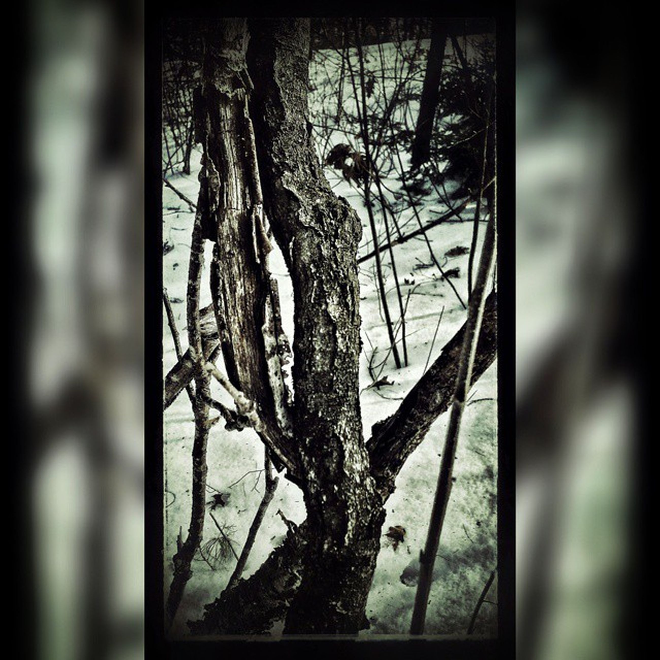 indoors, window, glass - material, tree, tree trunk, close-up, branch, home interior, auto post production filter, broken, transparent, day, abandoned, transfer print, no people, bare tree, damaged, wood - material, hanging, sunlight