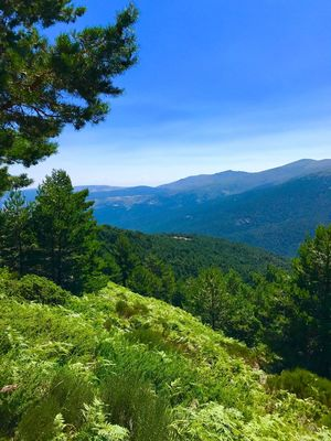 Perspectives On Nature Beauty In Nature Nature Tree Green Color Forest Tranquil Scene Mountain Tranquility Landscape Growth Scenics No People Day Outdoors Mountain Range Sky Peñalara Madrid
