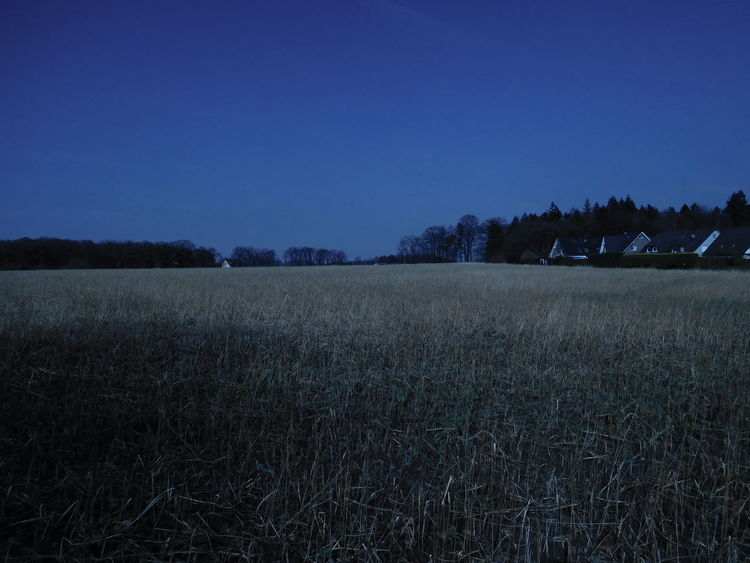 Blue Blue Cast Meadow Field Late Evening Late Evening Sky Cold Dark Scary