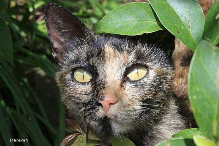 Cats 🐱 Close-up Portrait Eye Green Color Leaf Nature Animal Themes Stray Cat Pet Portraits