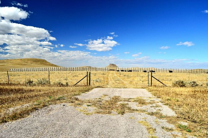 Cows lined out in the distance Herd Of Cows South Of Manville Wyoming Outdoors Clouds And Sky Yellow Color Many Of A Kind Blue Color Snow Fence Motion Pasture Grass Cloud - Sky