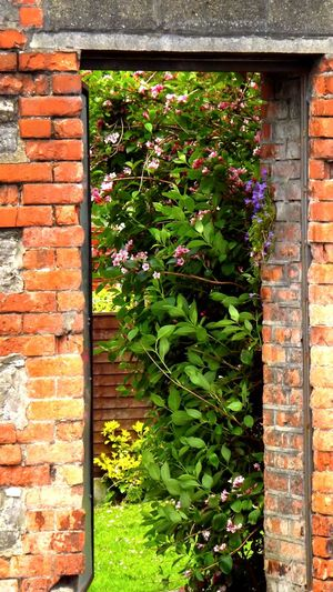 Another World Architecture Beautiful Place Beautiful Secret Beautiful World Brick Wall Built Structure Close-up Door Is Open EyeEm Best Edits EyeEm Best Shots - Nature EyeEm Nature Lover Flower From My Point Of View Good Night ♡♡ Green Hello World ✌ Hidden Paradise I LOVE PHOTOGRAPHY❤️ Invitation Ireland🍀 No People Outdoors Secret Garden Taking Photos