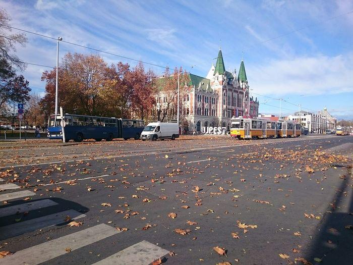 Újpest autumn Autumn Leaves
