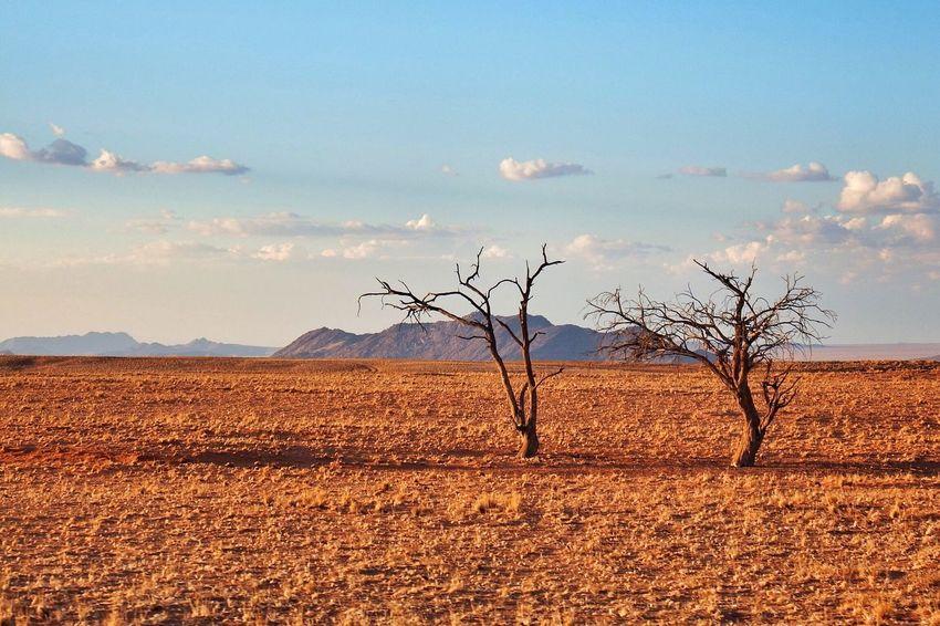 Namib Desert Namibia Namib Desertlife Deserts Desert Landscape Desert Life Desert Beauty Deserts Around The World Desert