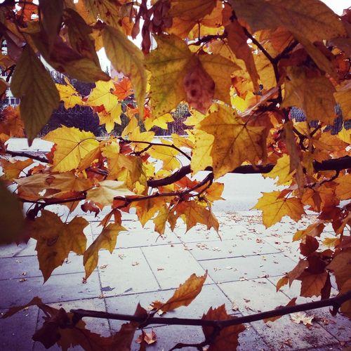 Ankara Türkiye Hüzün... Autumn Autumn colors Autumn🍁🍁🍁 Backgrounds Yellow Multi Colored Abstract Full Frame Close-up