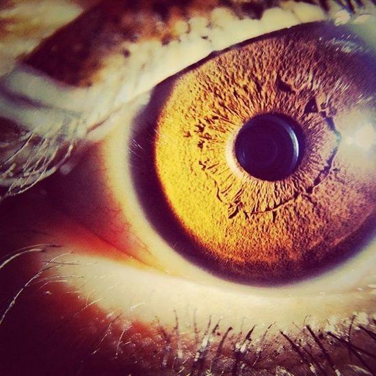 My Eye Woth Macro Lens