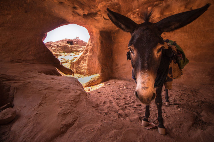Donkey Standing In Cave