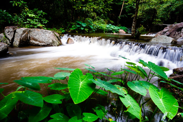 Ratchaburi, Thailand SuanPhung Suanpueng Ratchaburi Waterfall Waterfall_collection น้ำตกเก้าโจ ราชบุรี สวน