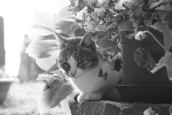 Cats Civita Di Bagnoregio First Eyeem Photo Italy Blackandwhite Photography Blackandwhite Playing With The Animals Animals Cat♡ Catoftheday