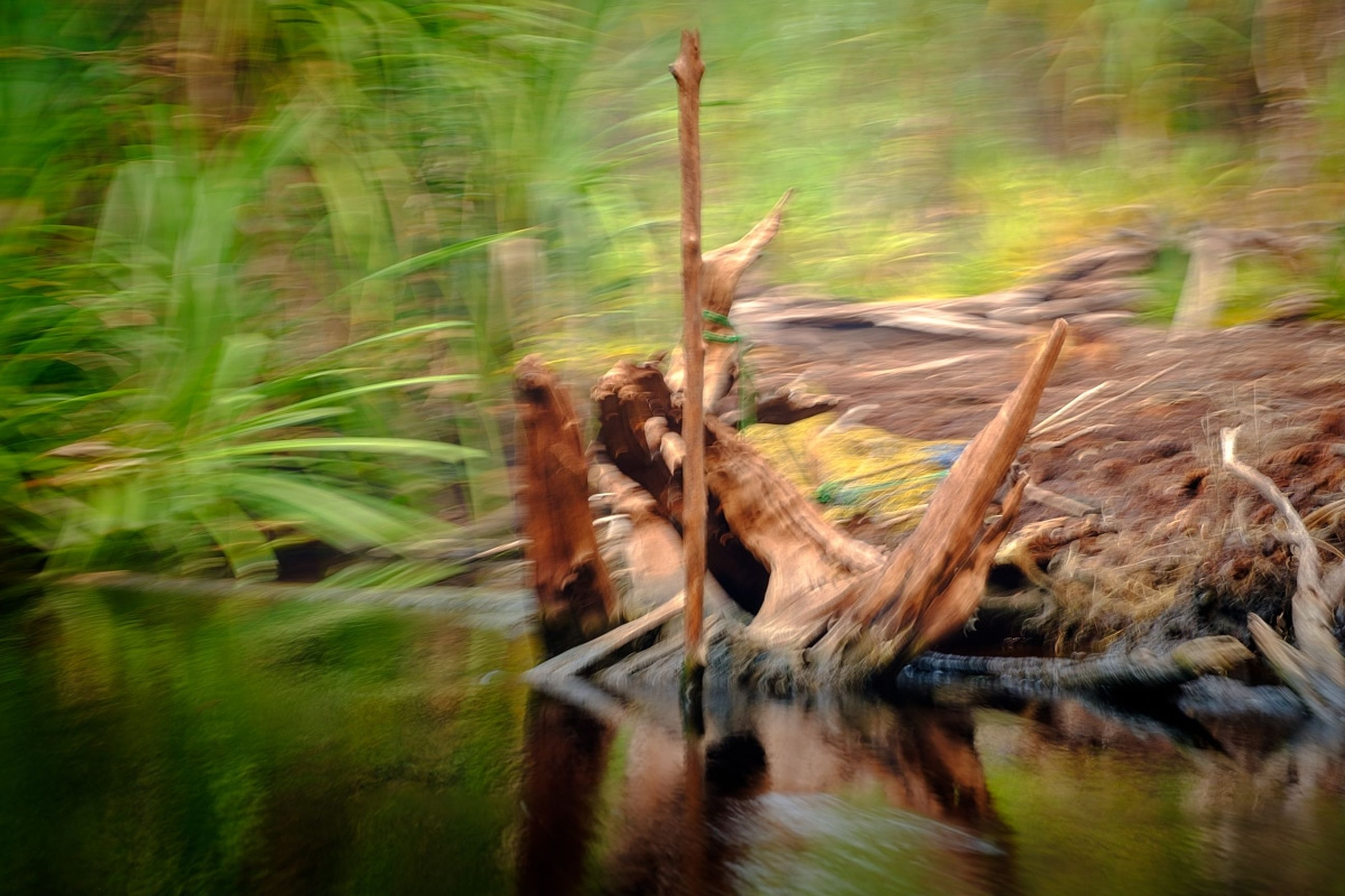 plant, one animal, blurred motion, nature, no people, vertebrate, animal wildlife, motion, animal, green color, land, grass, animals in the wild, animal themes, day, growth, water, field, speed, outdoors