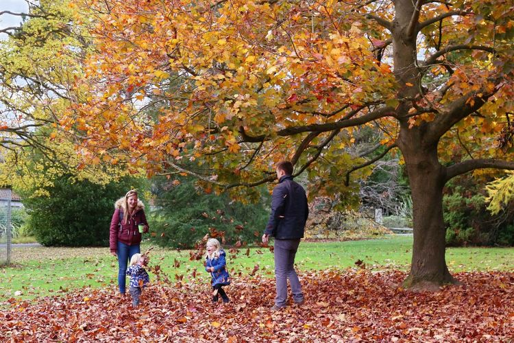 Autumn Mood Autumn Leaf Plant Part Women Tree Family Child Parent Childhood Group Of People Adult Togetherness 50 Ways Of Seeing: Gratitude Holiday Moments A New Perspective On Life