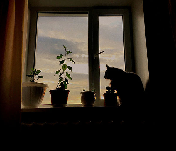 Silhouette woman sitting on window sill at home