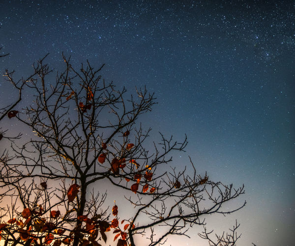 Tree Sky Night Space Astronomy Star - Space Branch Plant Bare Tree Beauty In Nature Scenics - Nature Tranquility Nature Low Angle View Star No People Star Field Tranquil Scene Outdoors Idyllic
