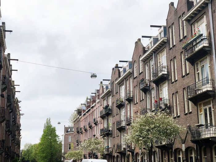 The beauty of Amsterdam, most people go for the party but the architecture is next to none! Building Exterior Sky Built Structure Architecture Low Angle View Nature The Architect - 2018 EyeEm Awards Vertebrate Bird Tree Building Outdoors Cloud - Sky Animal Themes Day Large Group Of Animals No People Residential District In A Row City Plant