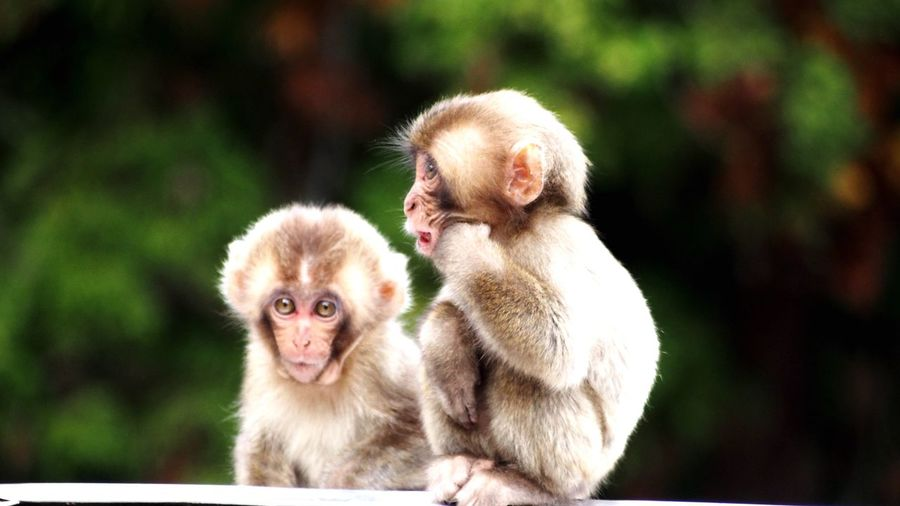 monkey Primate Mammal Young Animal Vertebrate Group Of Animals Focus On Foreground Animals In The Wild People Child Animal Wildlife Baby Young Two Animals Outdoors Day Togetherness Care Animal Family EyeEmNewHere