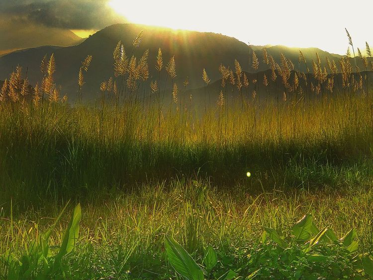 Grass Nature Sunlight Field Outdoors Landscape Beauty In Nature Freshness Countryside Sky Mountain Tall Grasses Kulotitay Clicks Nature Beauty In Nature Mountain Range Perspectives On Nature