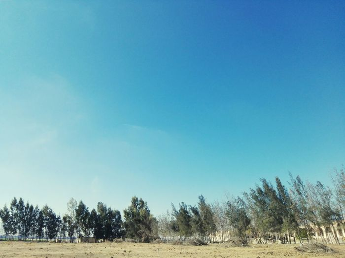 Tree Blue Sky Nature Agriculture No People Clear Sky Landscape Outdoors Day Beauty In Nature