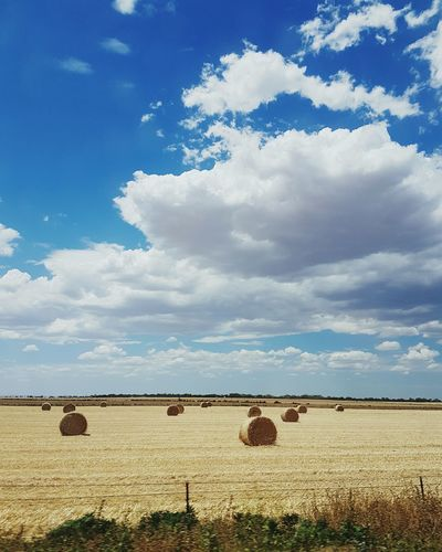 Summer Blue Sky Agriculture Nature Tranquility Water Sunlight Cloud - Sky Archival Social Issues No People Sea Outdoors Beauty In Nature Day First Eyeem Photo