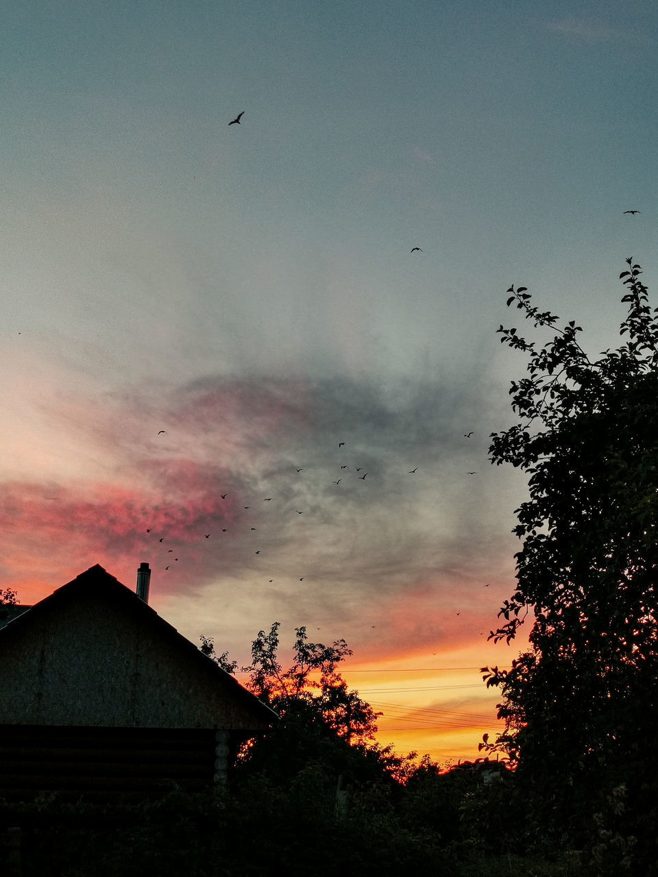 SILHOUETTE OF TREES AND HOUSES AGAINST SKY AT SUNSET