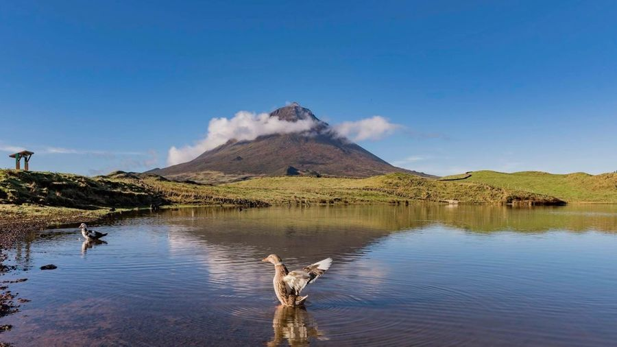 Açores Volcano Mountain Beauty In Nature Outdoors Scenics No People Animal Themes Erupting Day Smoke - Physical Structure Sky Animals In The Wild Water Natural Phenomenon The Great Outdoors - 2017 EyeEm Awards