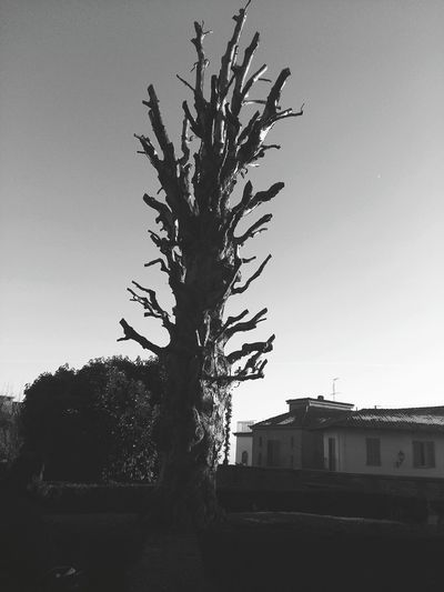 Tree No People Sky Day Bare Tree Outdoors Piemonte Piedmont Italy Govone (CN) Govone  Tree Govone Piemonte